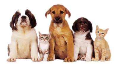 animaux savoir-vivre règles politesse, animaux pets étiquette biensénace, dressage animaux réussi